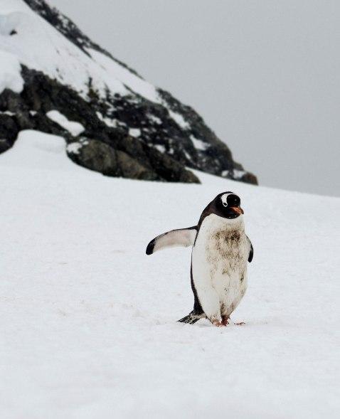 Antarctica-13